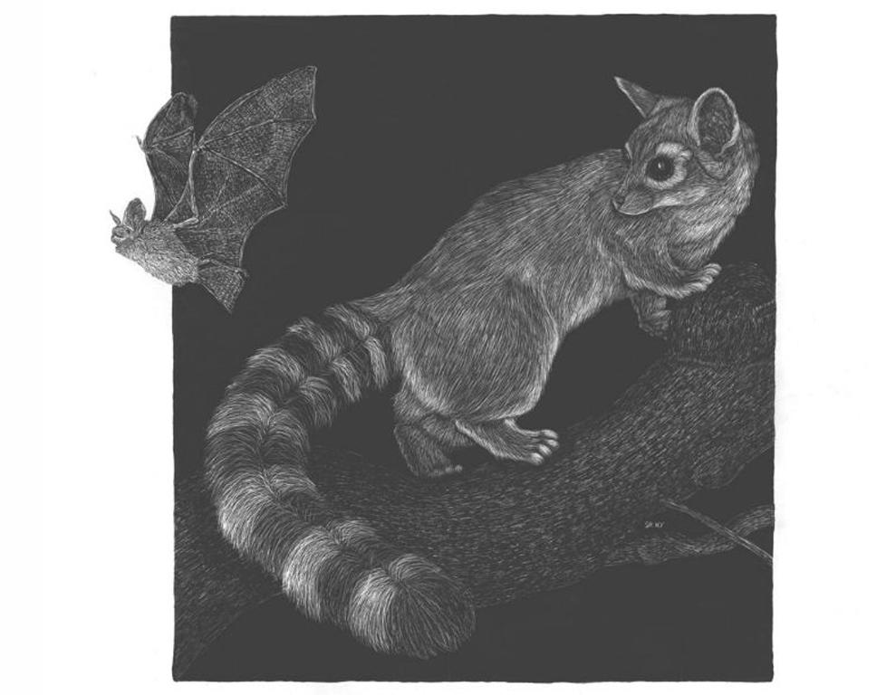 Ringtail and Pallid Bat