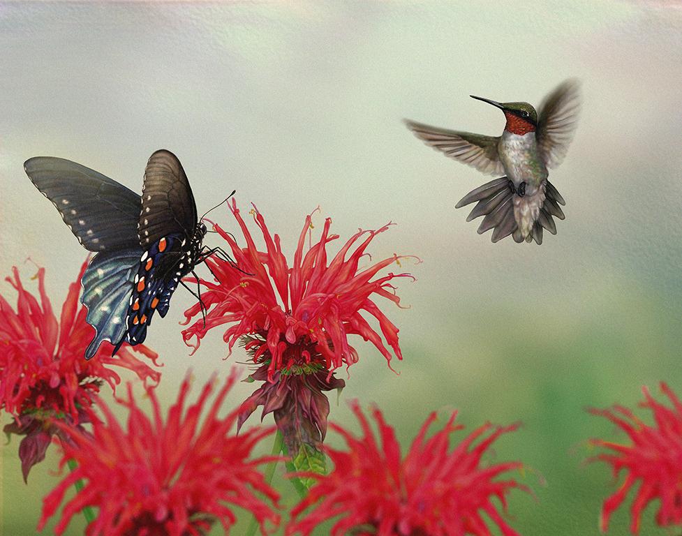 Copy of Scarlet Pollinators