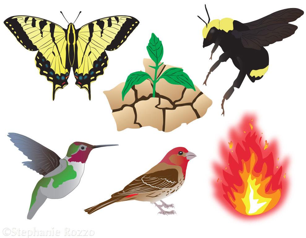 Copy of Native Plant Garden Icons