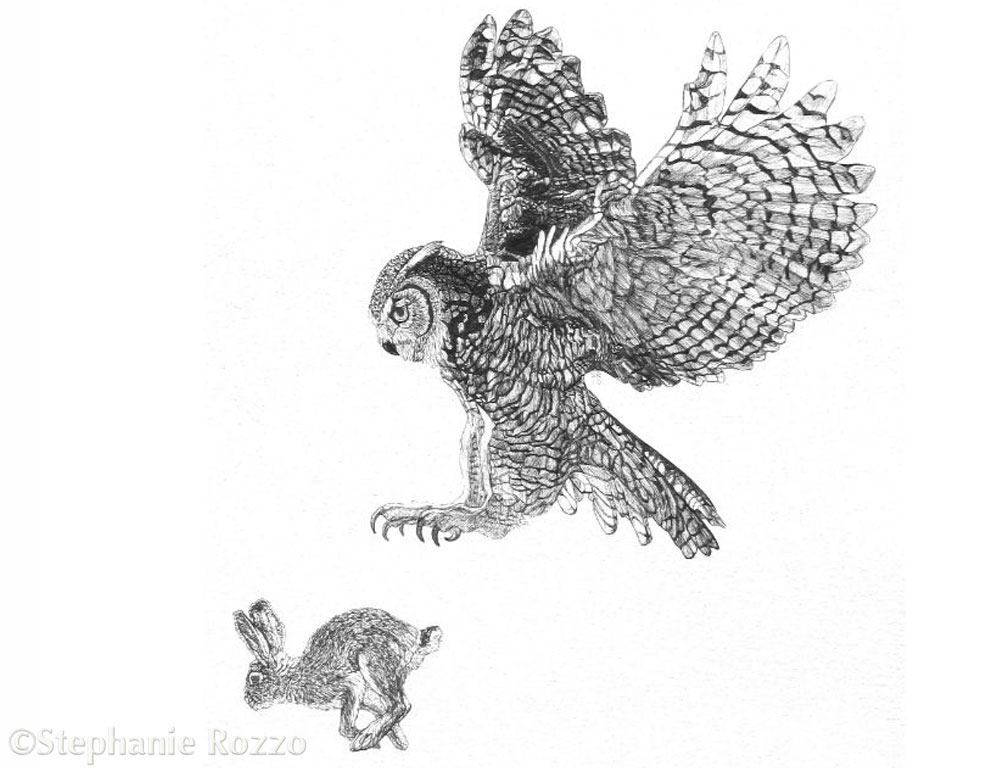 Great Horned Owl and Desert Cottontail