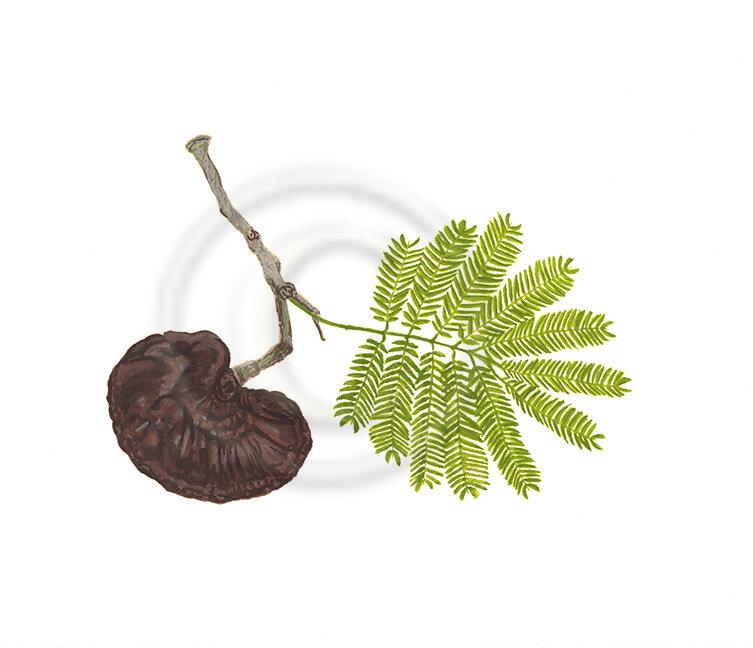 Guanacaste-tree-final-web.jpg