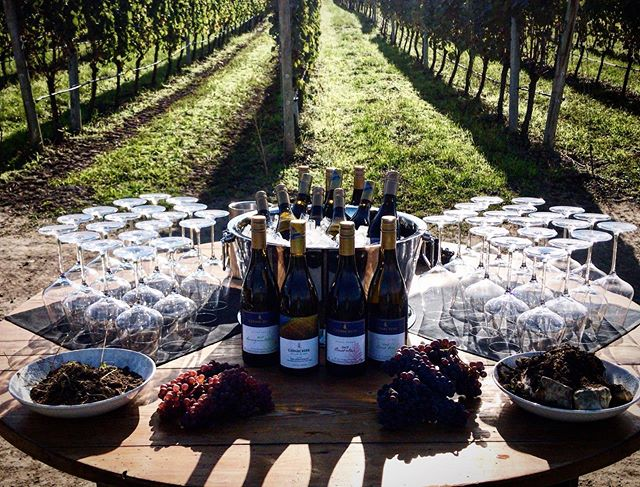 VIP wine tasting in the vineyard @cedarcreekwine ❤️🍷 #wine #okanaganwine #vineyard #winetasting #wineo #cedarcreekwinery #wineoclock