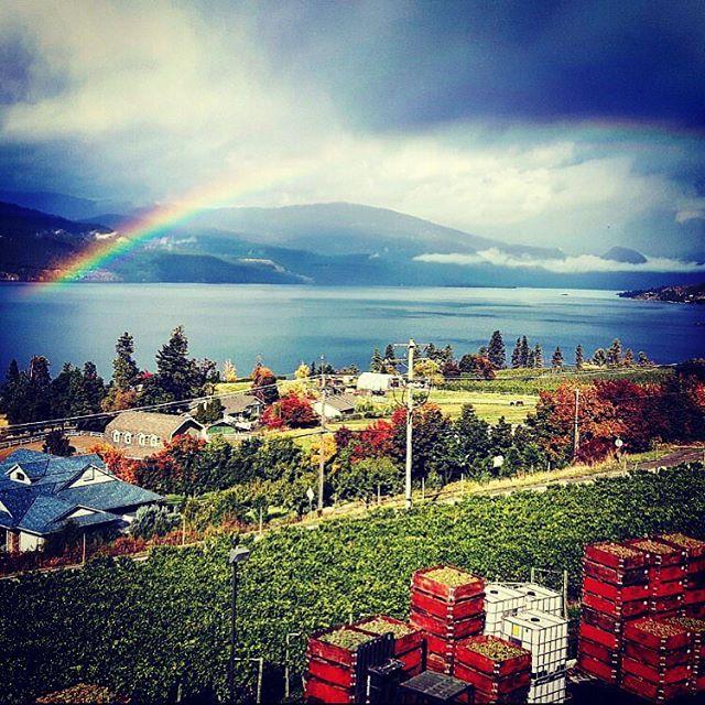 Okanagan harvest ❤️🍷🍇 @graymonkwinery #wine #vineyard #winelife #okanaganwine #okanagan #harvest #rainbow #views #explorebc