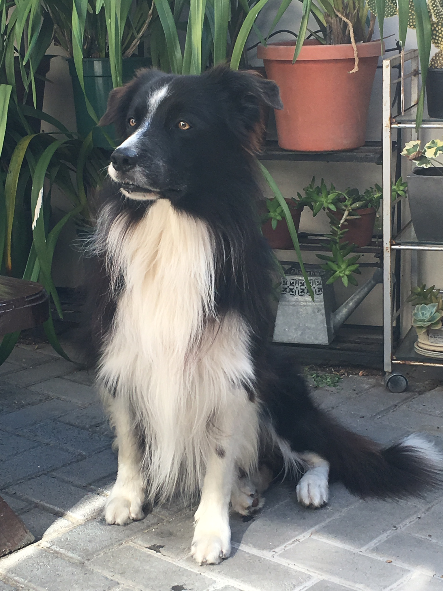 lastly, shaggy, our wonderful Border Collie  loves to meet with guests in the hope that they will throw a ball for him to fetch!