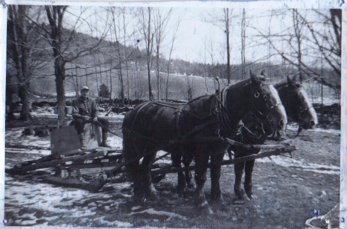 Ernest with his team and tank sleigh to gather the sap