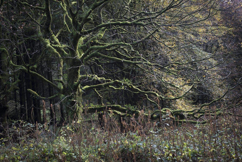 ForestSmall-3.jpg