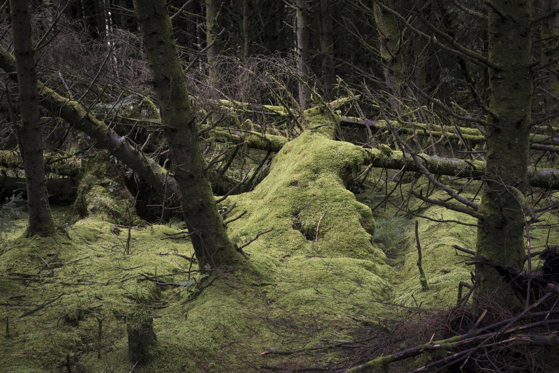 ForestSmall-8.jpg