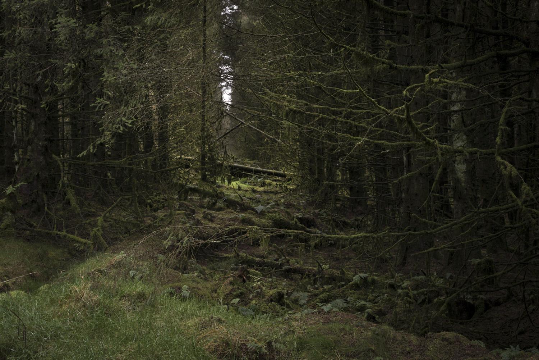 ForestSmall-13.jpg