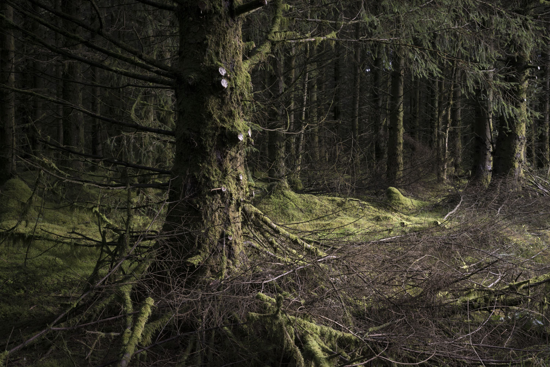 ForestSmall-15.jpg