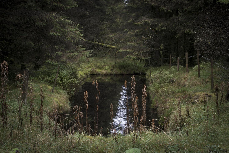 ForestSmall-21.jpg