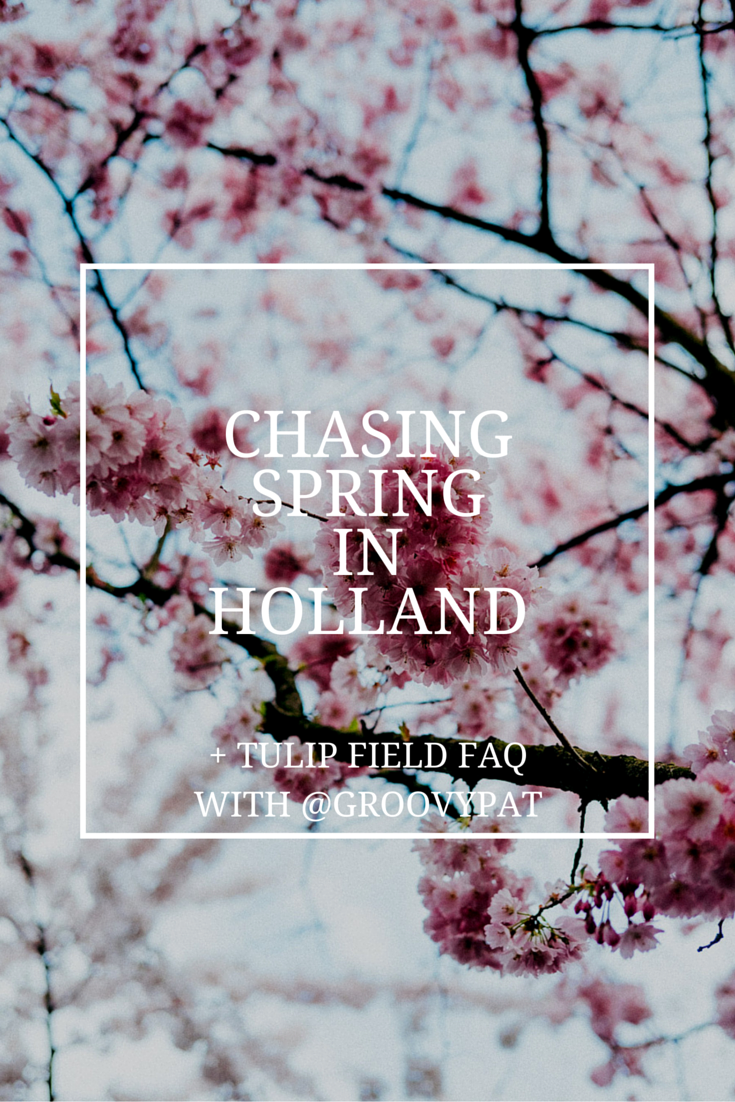 Chasing spring in Holland - Tulip fields and cherry blossoms