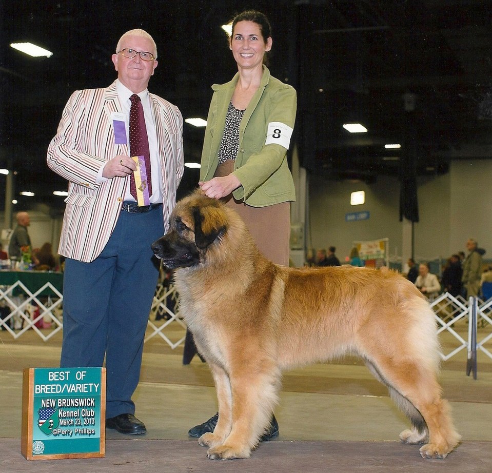2 years - Best of Breed