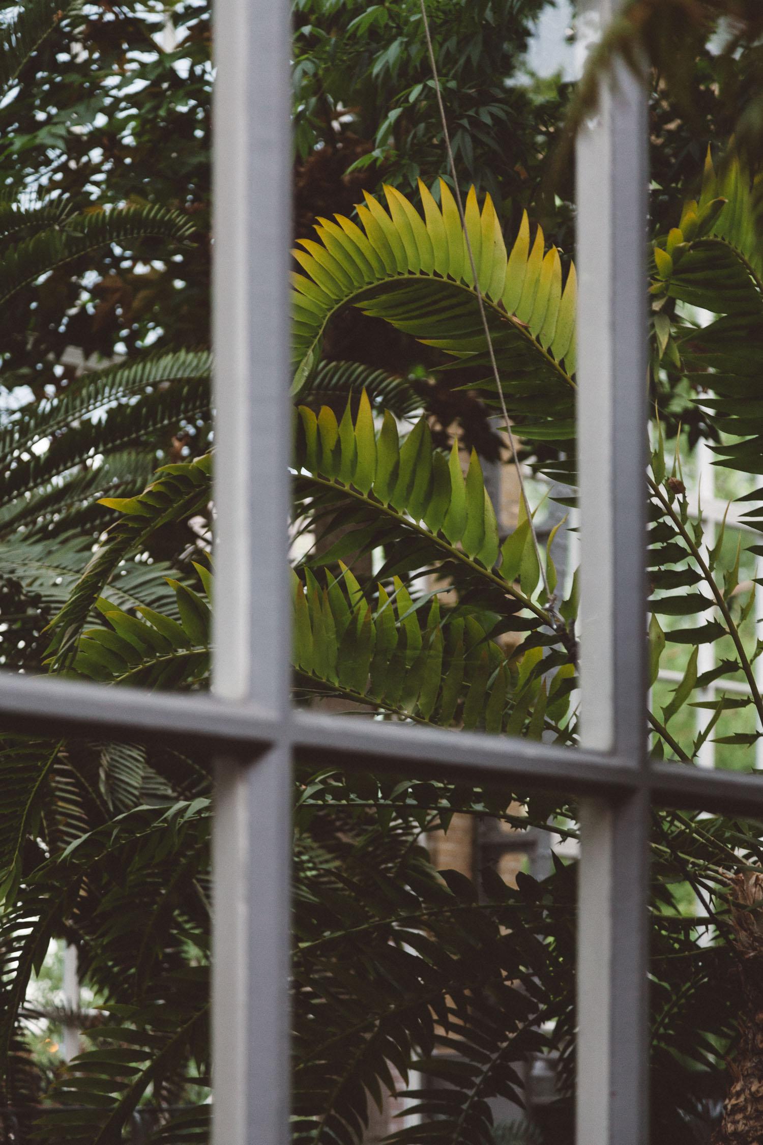 Wedding-Bethan-and-Mike-Hortus-Botanicus-photography-On-a-hazy-morning-Amsterdam013.jpg
