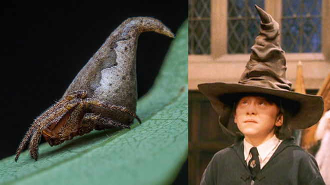 The Sorting Spider Meets Harry Potter's Sorting Hat!