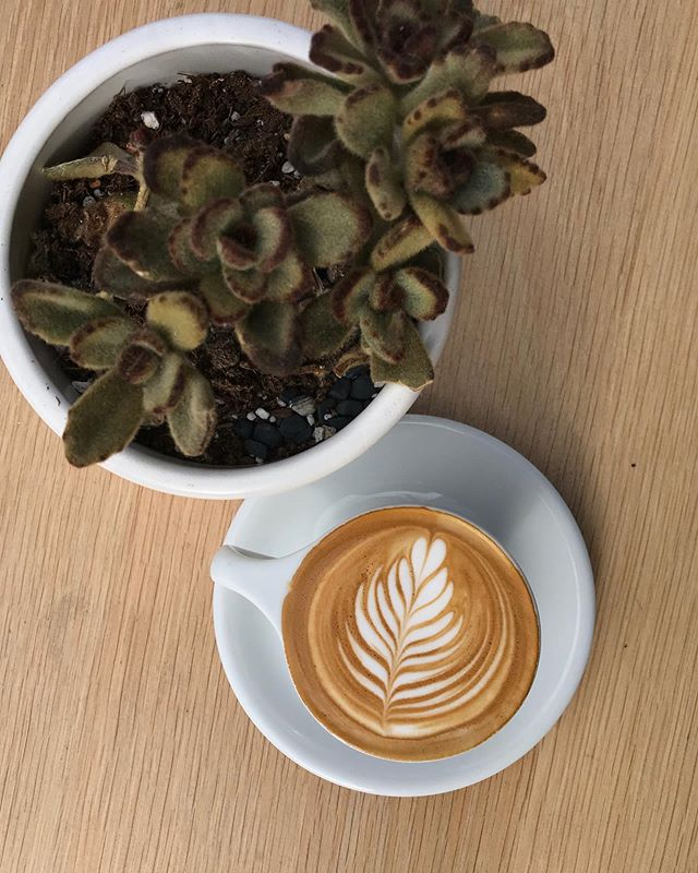 Capps and cacti a perfect combo, just like our coffee with almond, oat, soy, or whole milk.