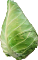 Cone Cabbage.png