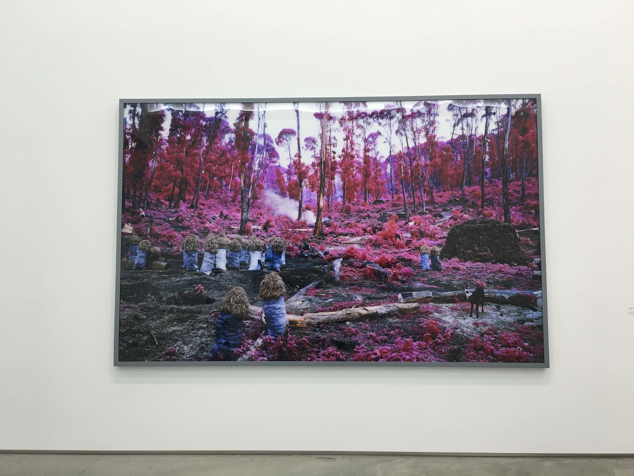 Richard Mosse,  Hunches in Bunches , 2011, Digital C-Print, 88x140 inches