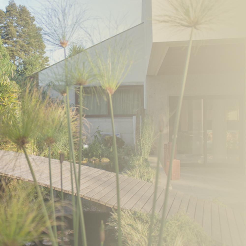 - Design paisagistasaber mais