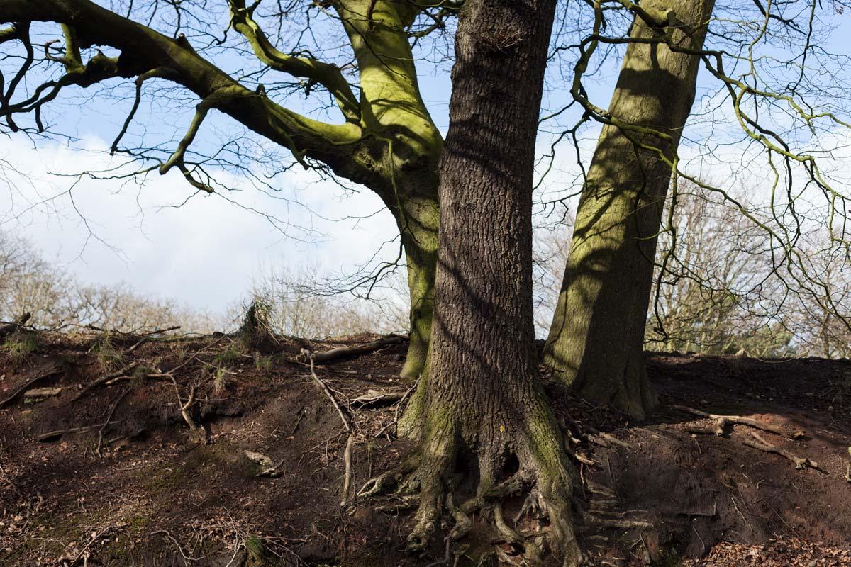 GreenTrees.jpg