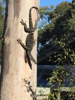 Goanna on Tree.jpg