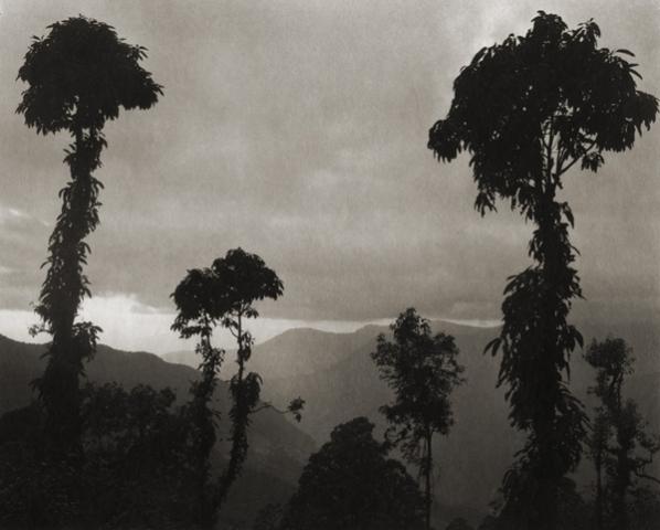 ©Regina DeLuise, Jungle Trees
