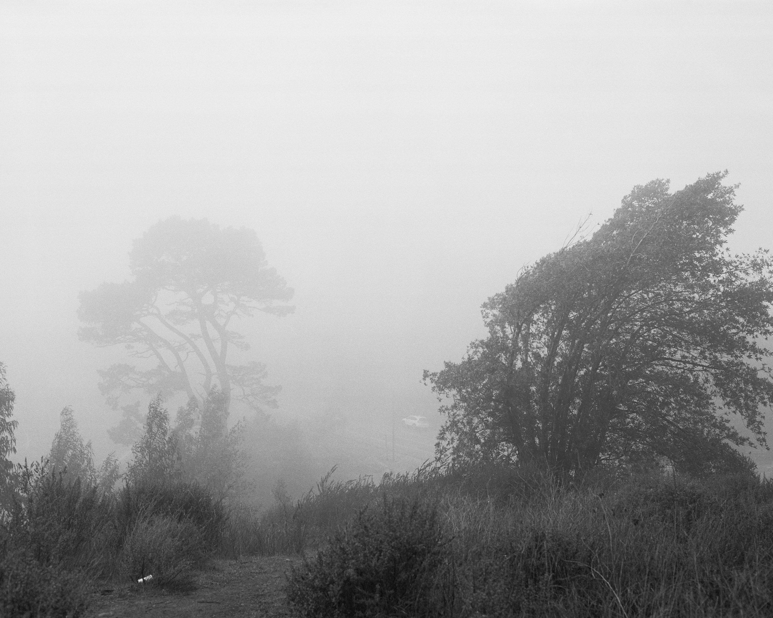 fog2 copy.JPG