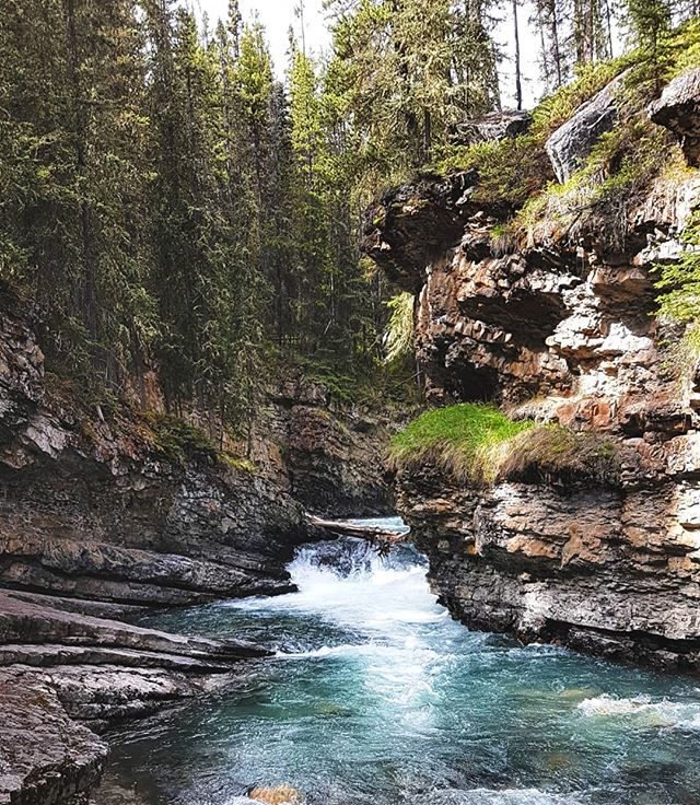 when you go off trail. . . . . . . . . . . . . . . . #explorealberta, #natgeo, #wildernessculture, #alberta, #canada, #rockies, #weekend , #thankyoucanada, #camp, #earth, #nature, #johnstoncanyon, #liveauthentic, #livefolk, #mountains, #explorecanada, #vsco, #vscocam, #afterlight, #discoverearth, #sun, #summer, #ourplanetdaily, #wonderful_places, #moss, #waterfall, #livingwall, #nikon, #travel, #sunday