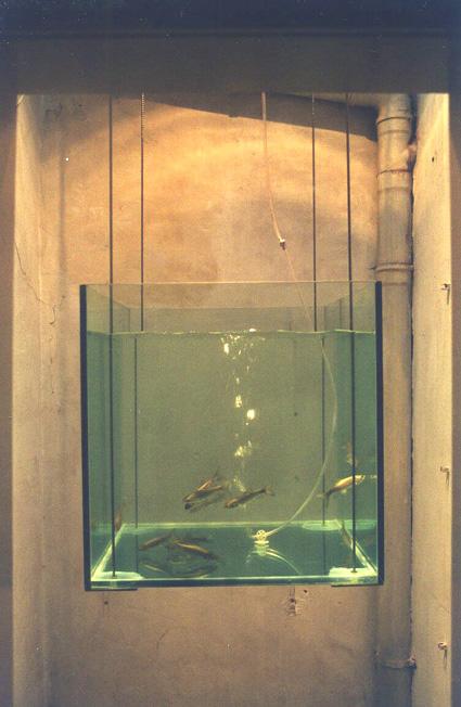 Fischtank2.jpg
