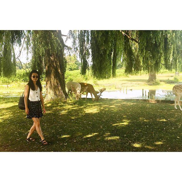 Park royals #deardeer