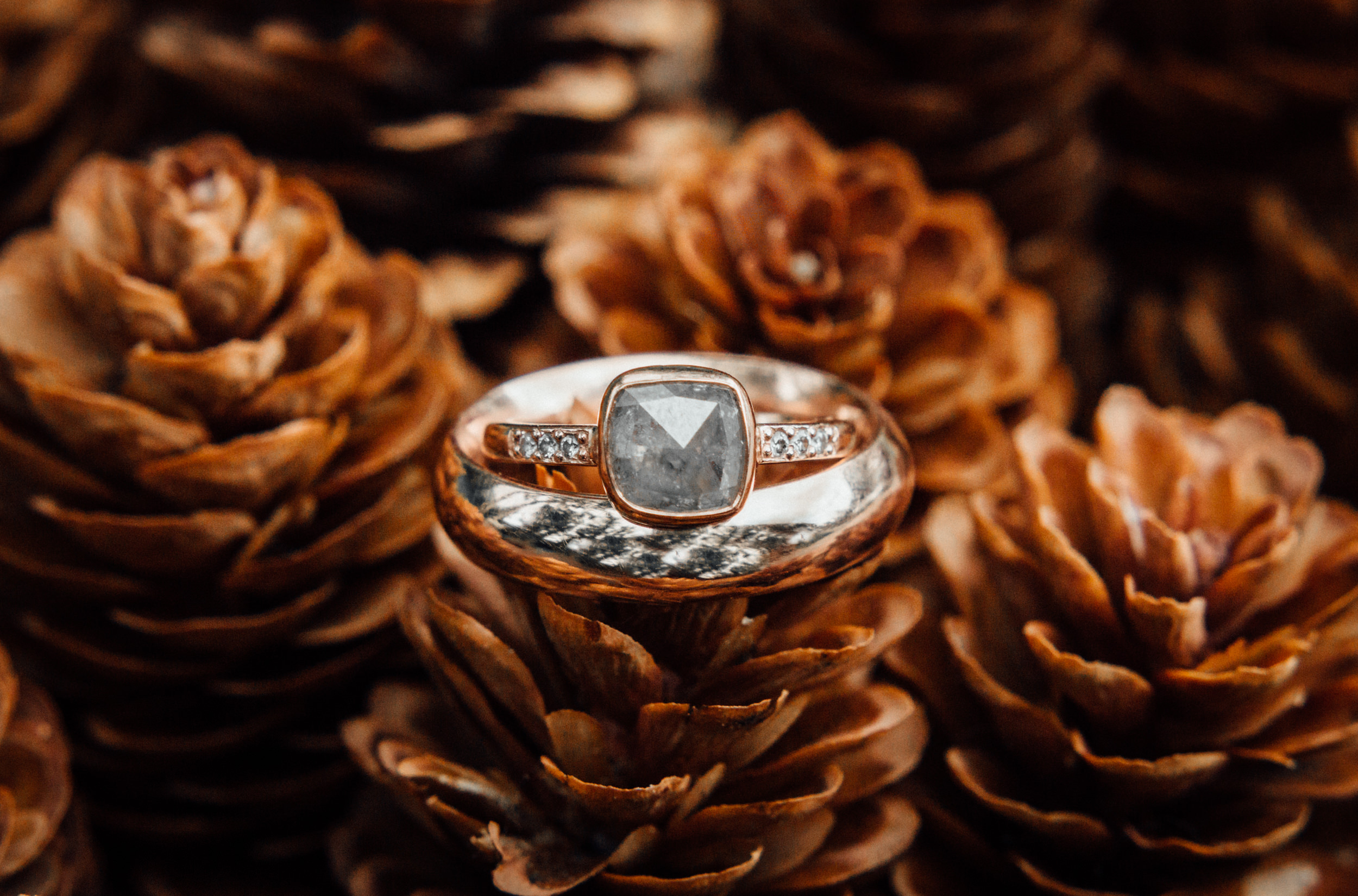 Macro ring shot in pinecones