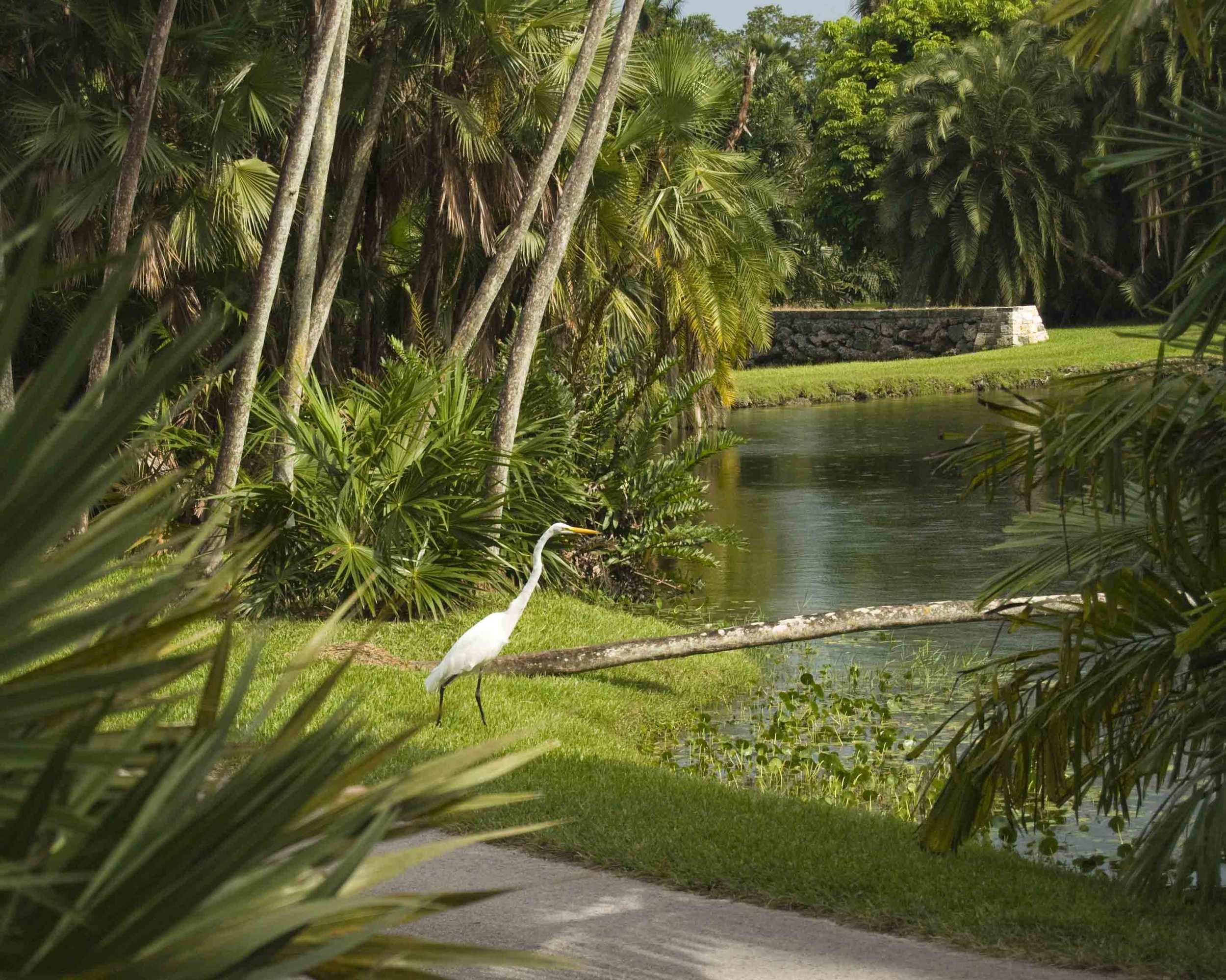 fairchild-white-egret.jpg