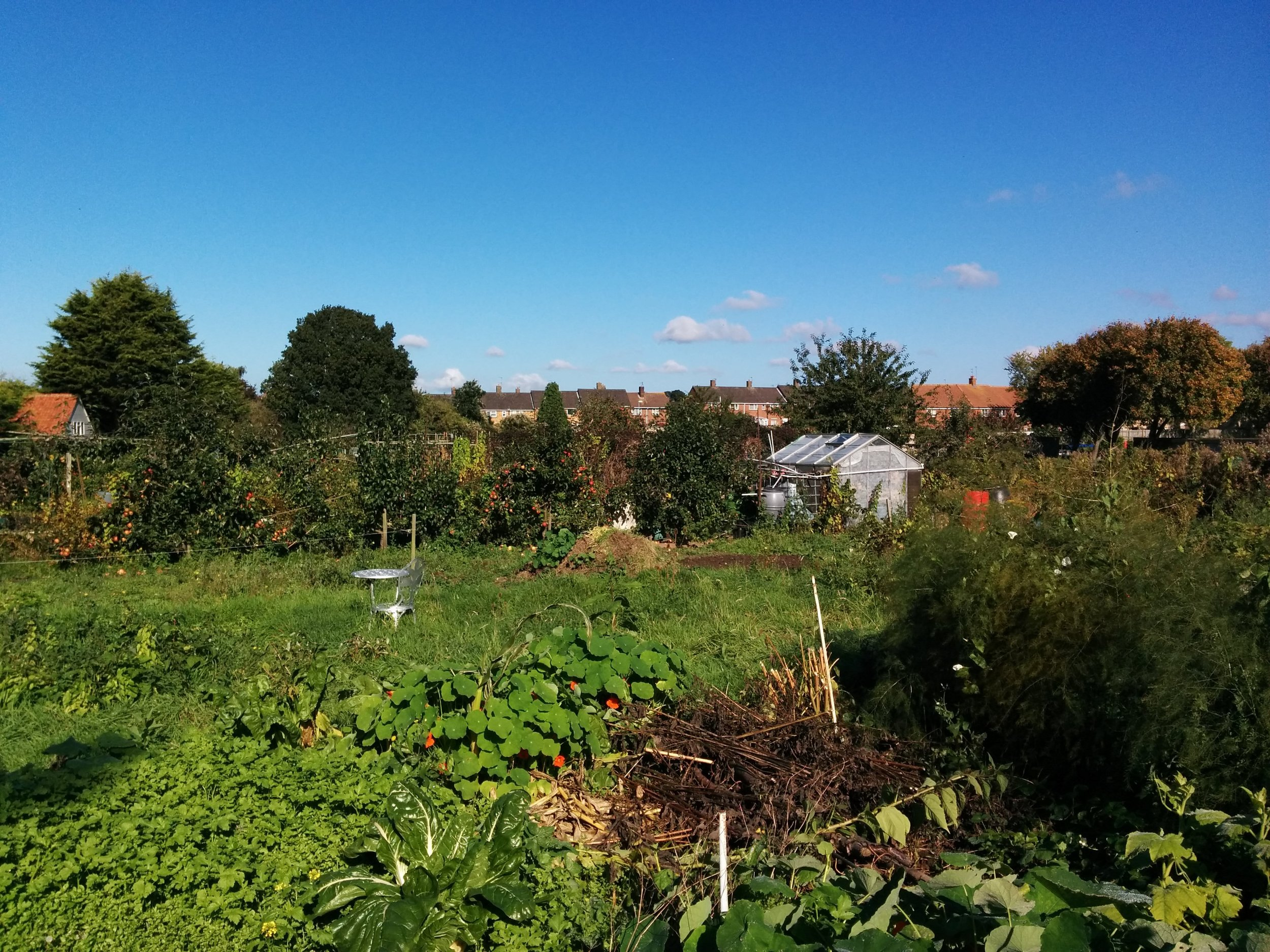 My dad's allotment, where he spends more time than he should.