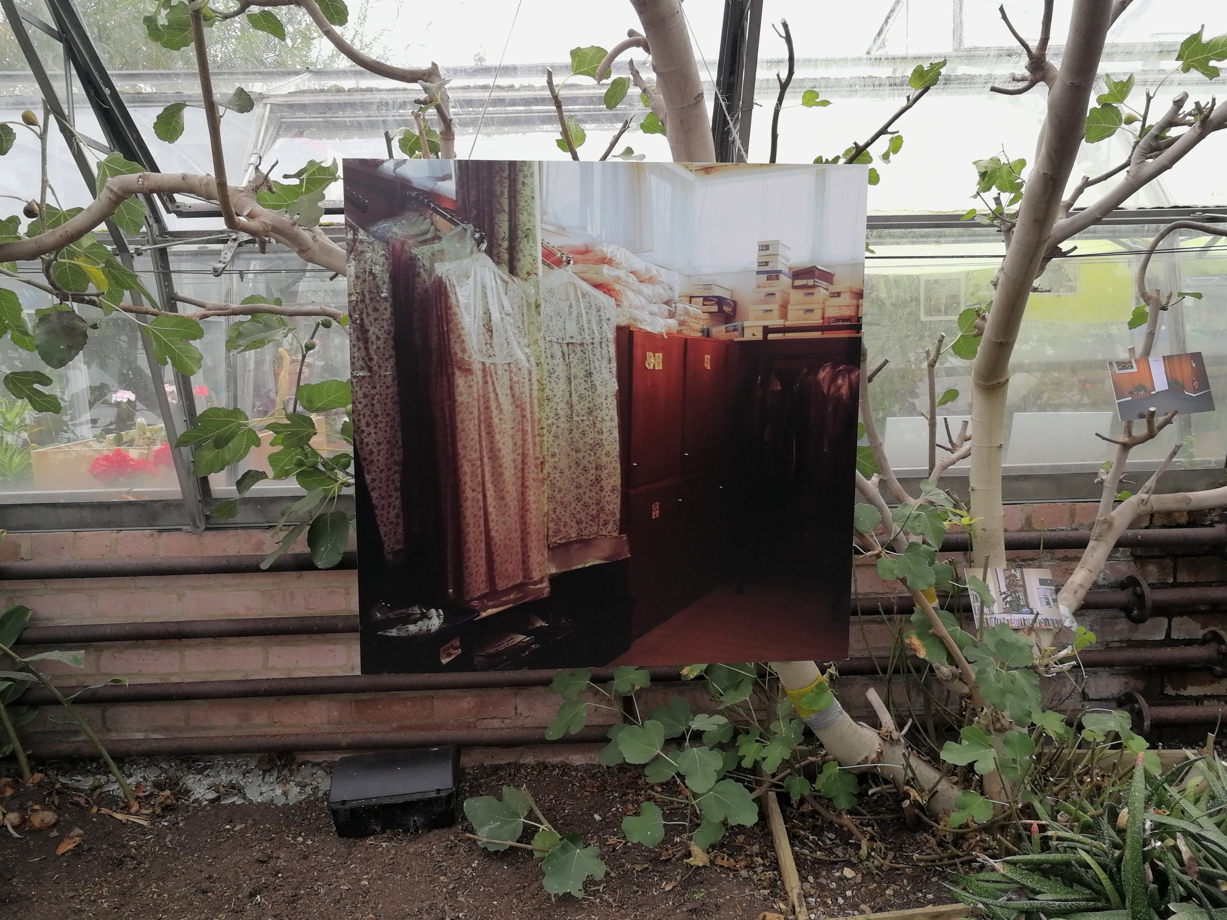 Installation image, from the REH Glasshouses temporary exhibition