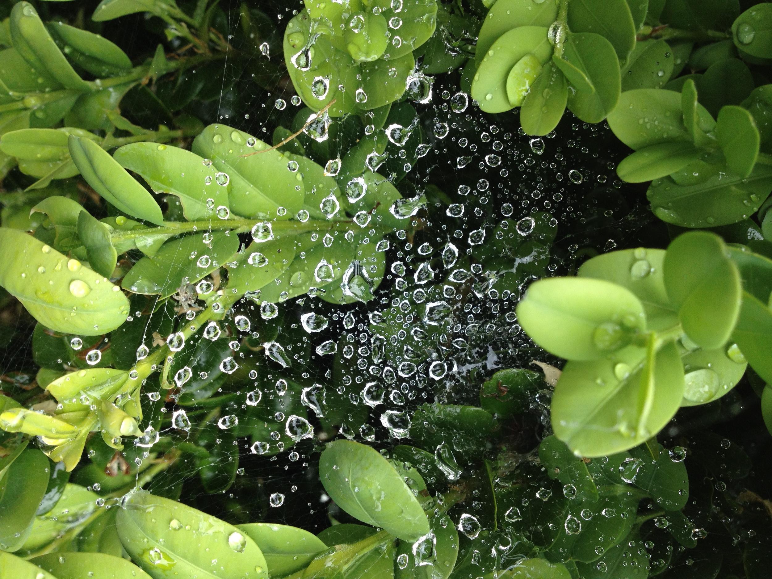 Each drop is a positive or negative Belief