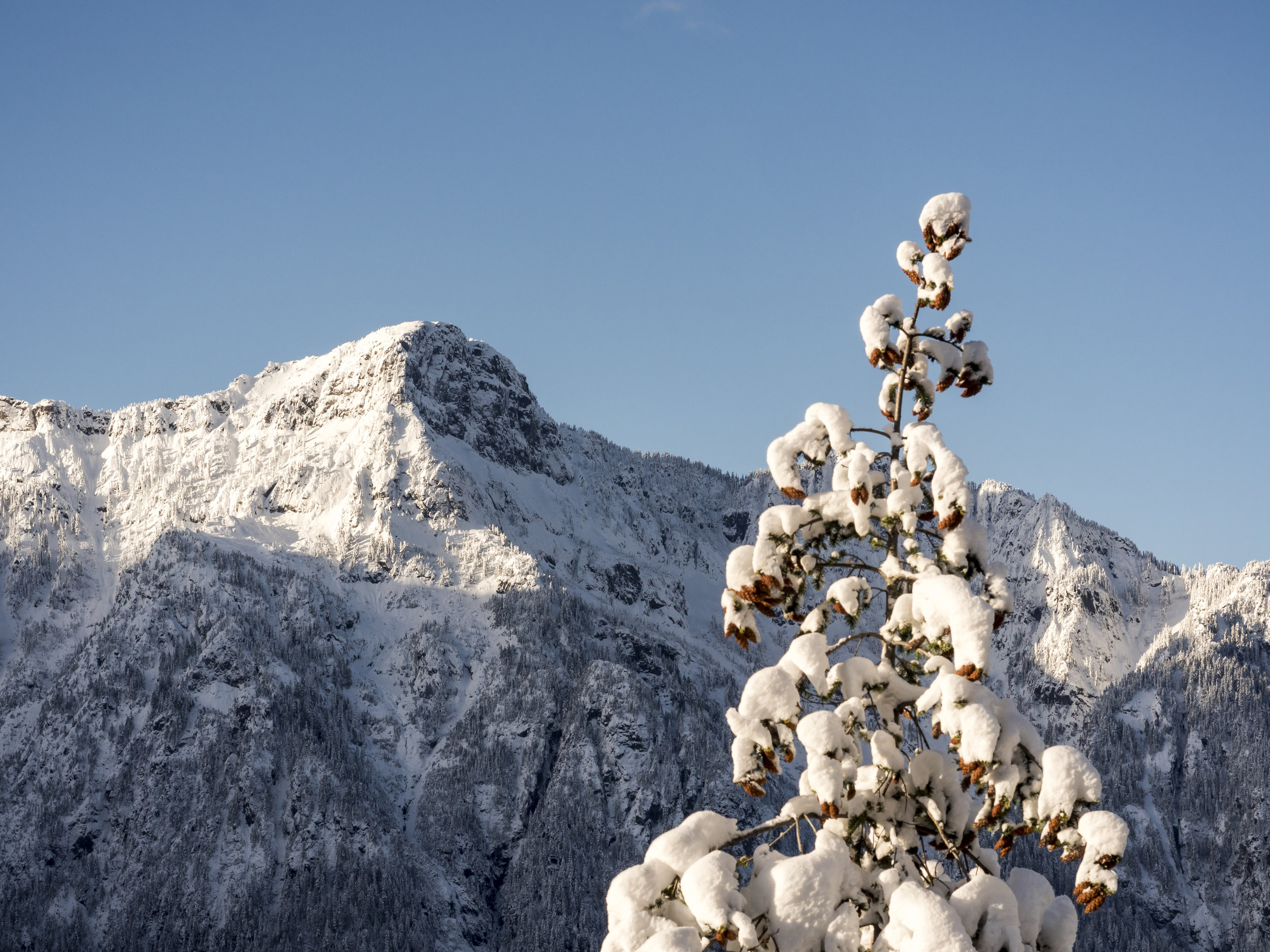 Snow Covered Mountain Ridgline with Pine Cones on Tree in Foreground