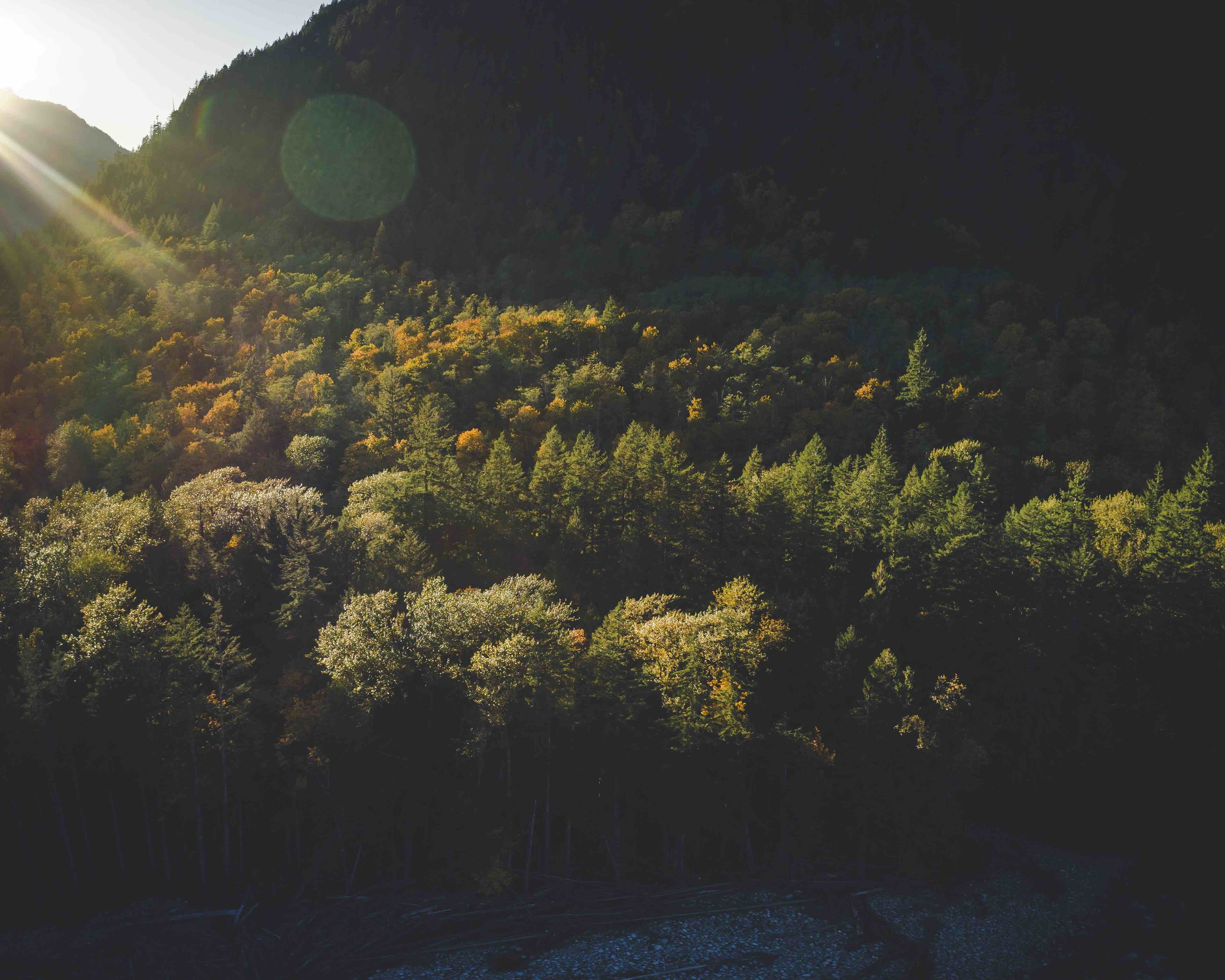 Dramatic_Natural_Lighting_on_Fall_Color_Forest_Trees.jpg