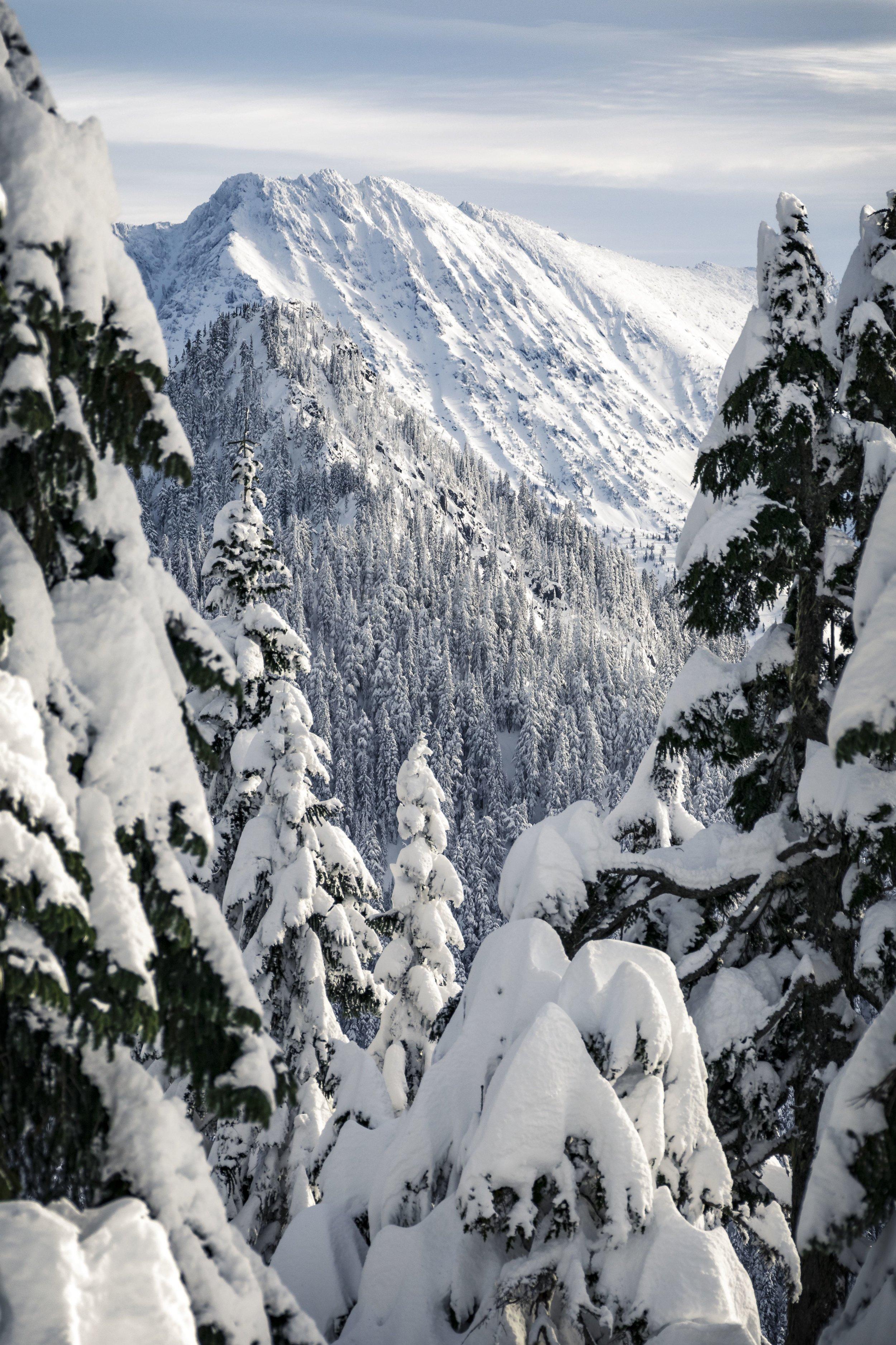 Snowy_Summit_Framed_By_Powder_Trees_in_Cascade_Mountain_Range.jpg