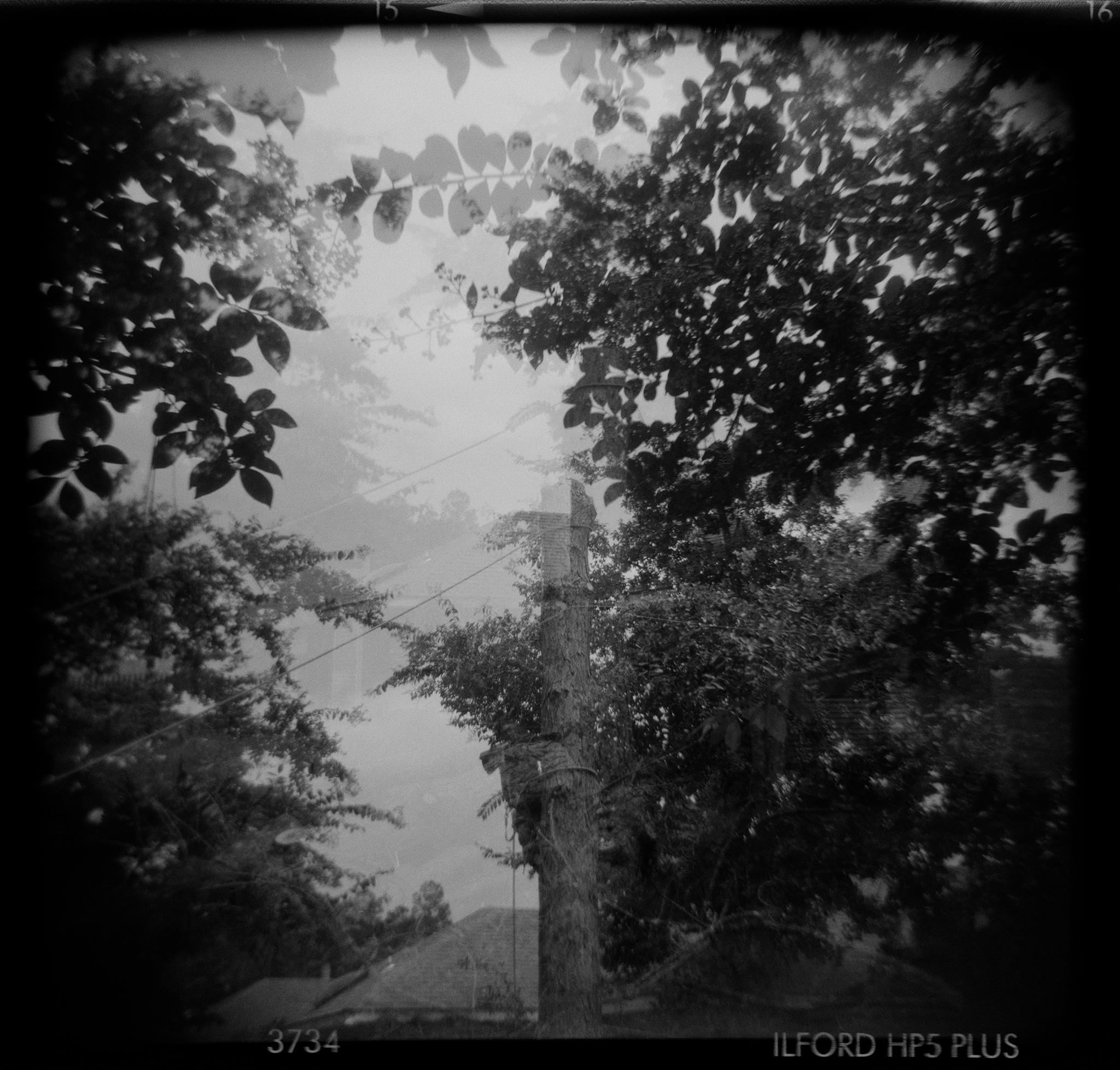 Debora-Francis-Pretty-Mysteries-03.jpg