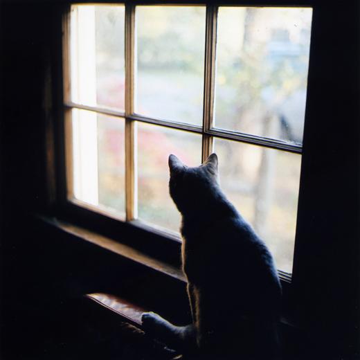 Debora-Francis-Little-Moments-1-16.jpg