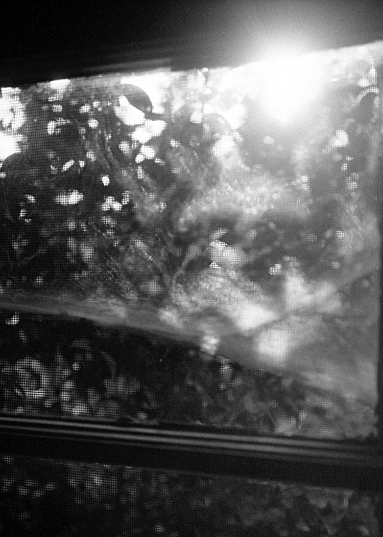 Debora-Francis-Little-Moments-2-16.jpg