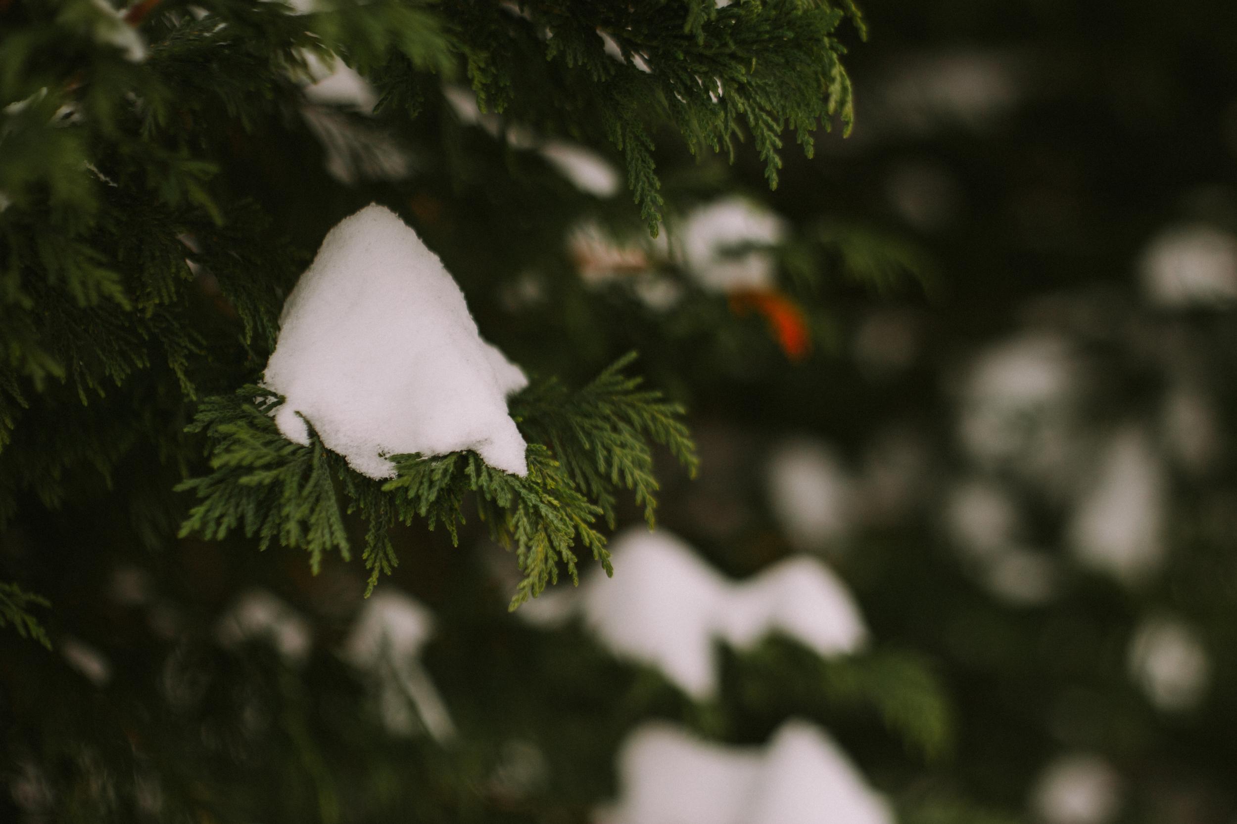 2015 january snow weekend 061.JPG