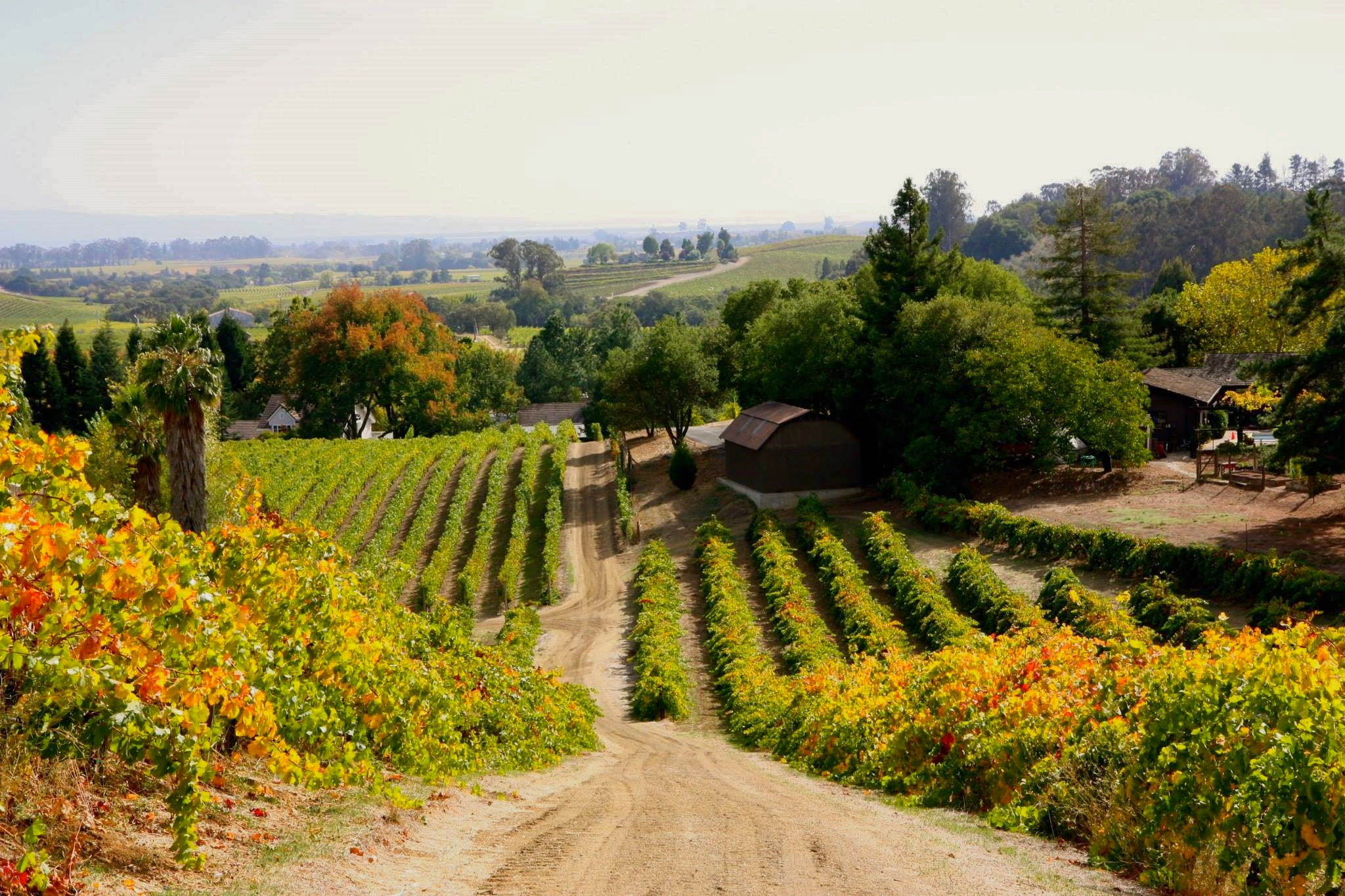Truchard Vineyards, where Tim proposed