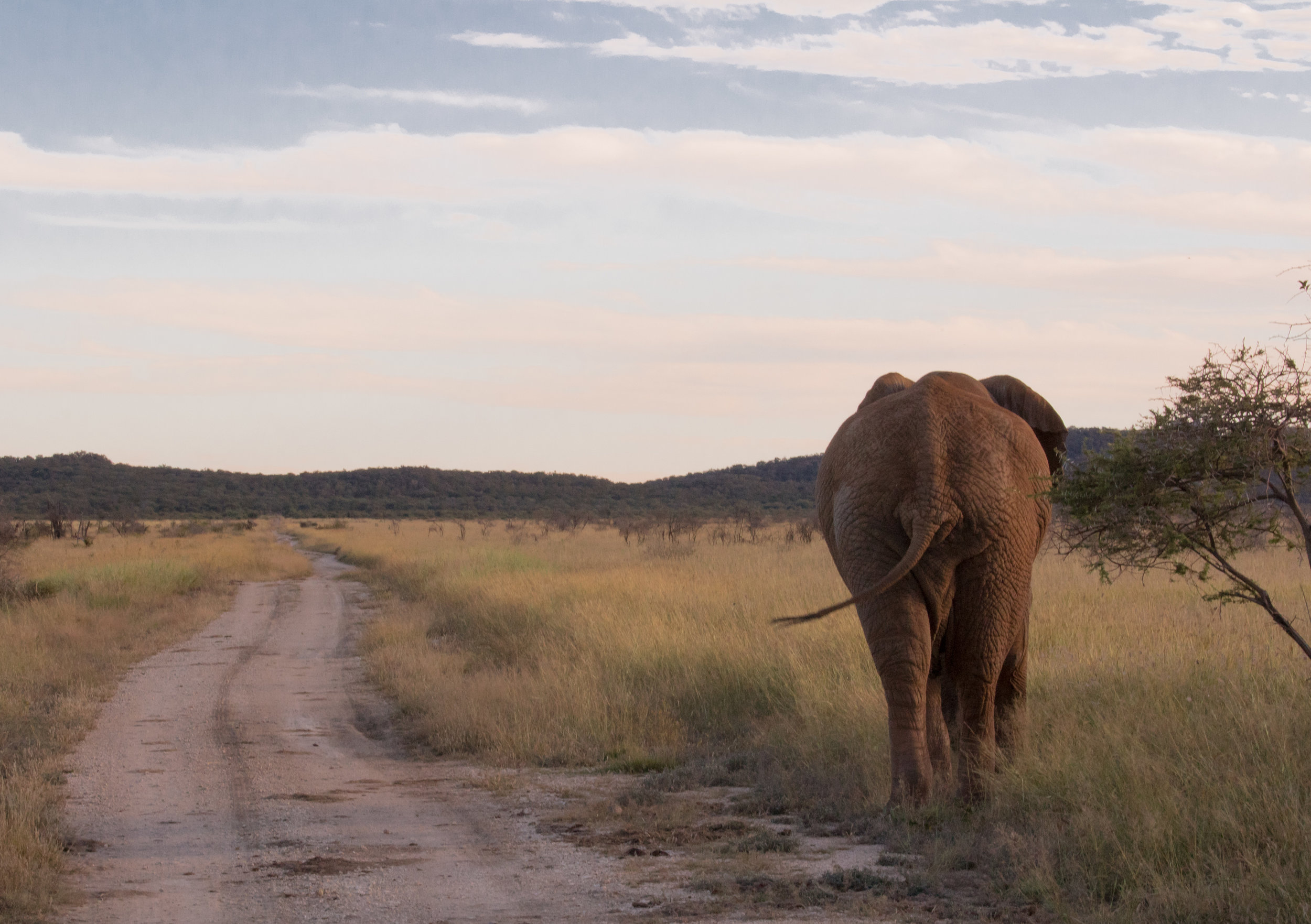 wikerts in wanderlust south africa safari