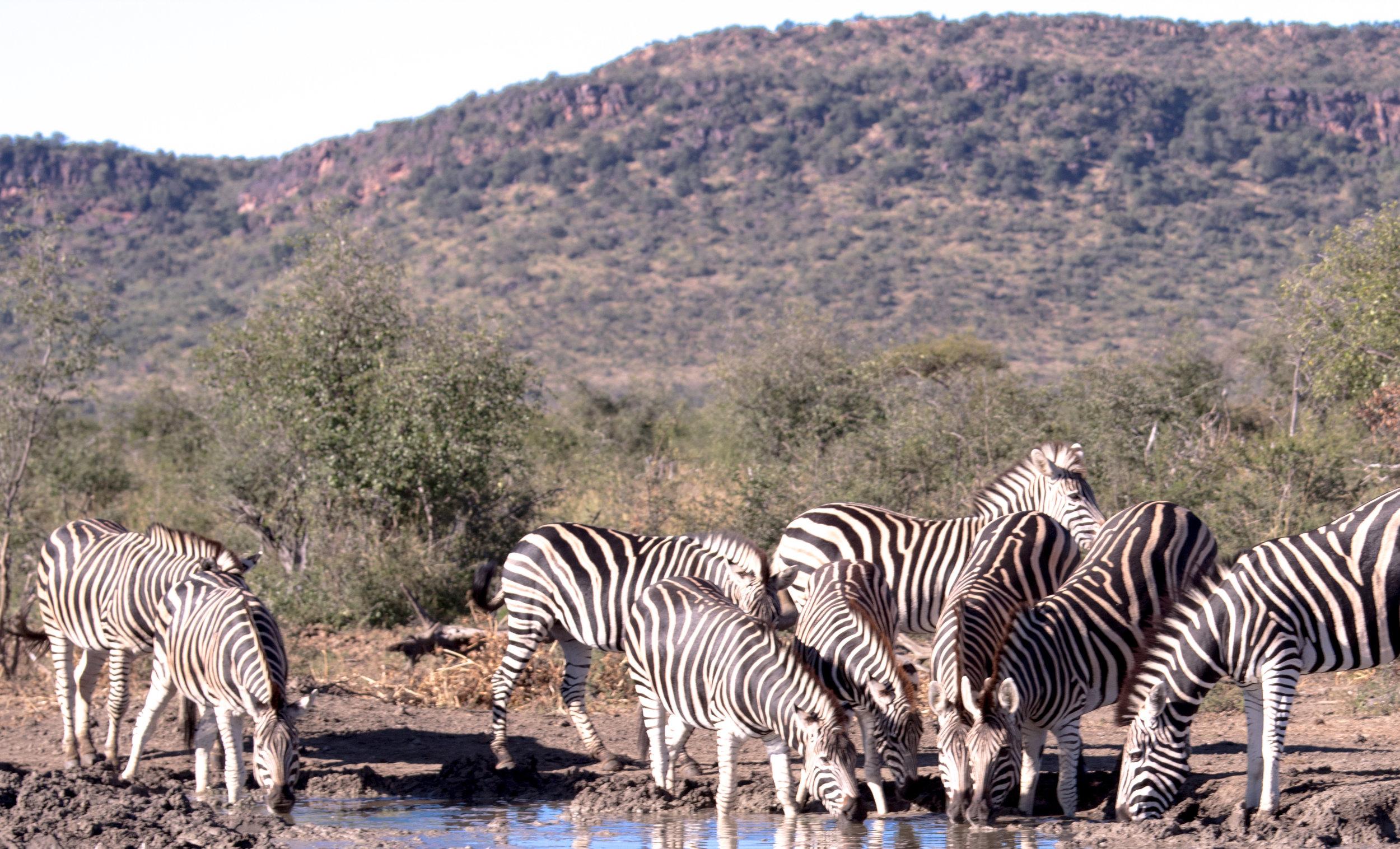 wikerts in wanderlust safari south africa