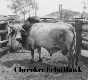 Cherokee Echo Hawk