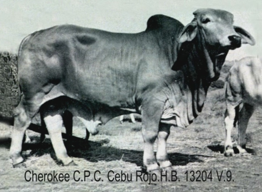 CPC Cebu Rojo.jpg