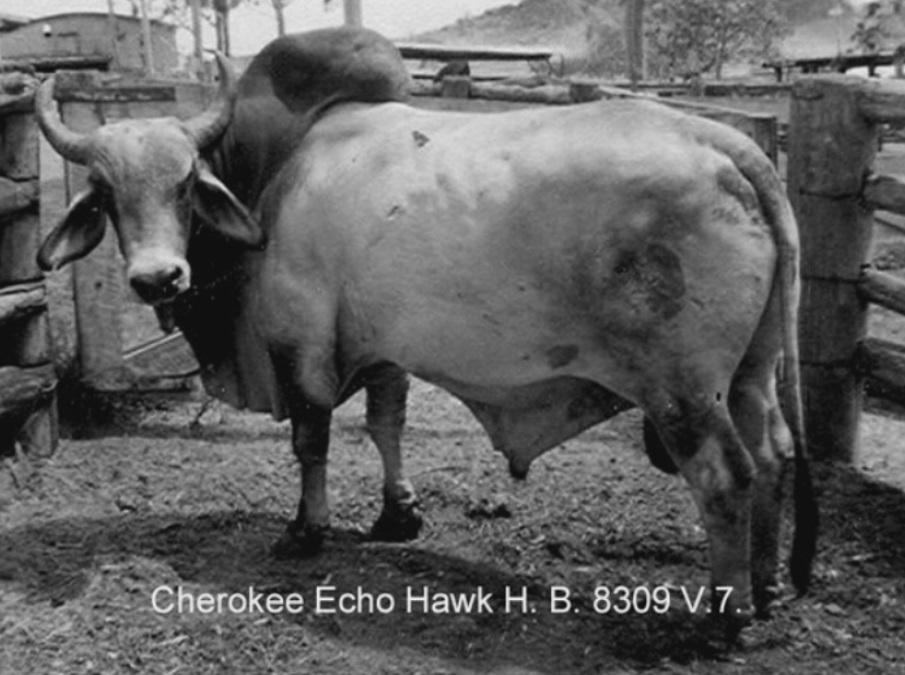 Echo Hawk.jpg