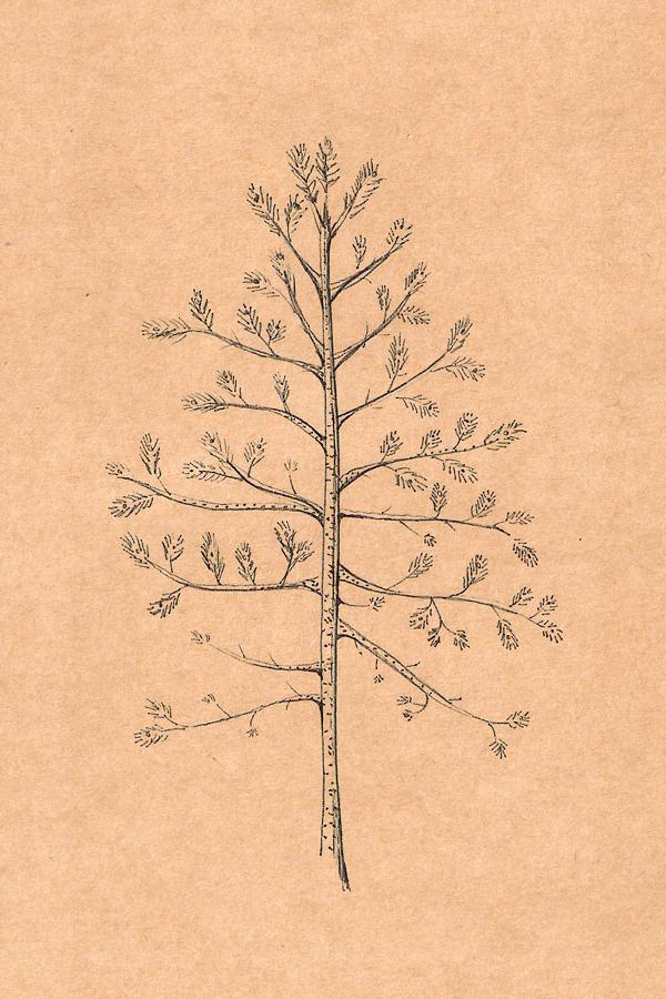 Träd1F.jpg