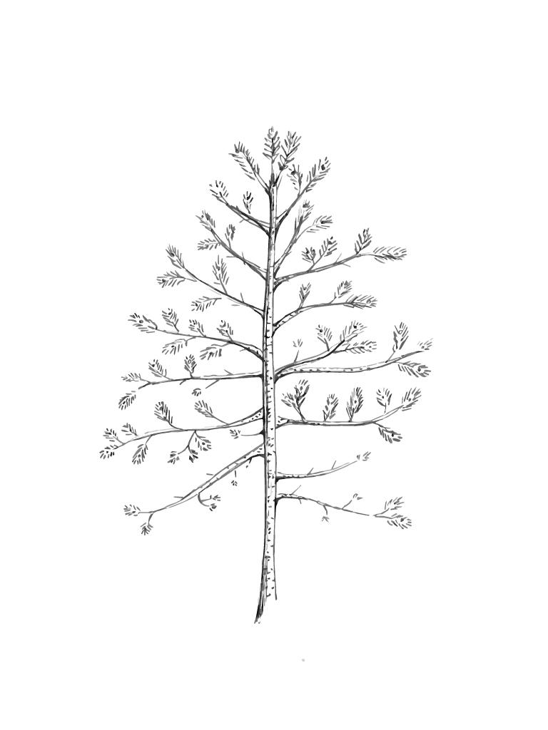 Träd1v2.jpg