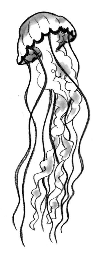jellyfish-sml.jpg